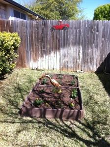 Our 2015 garden